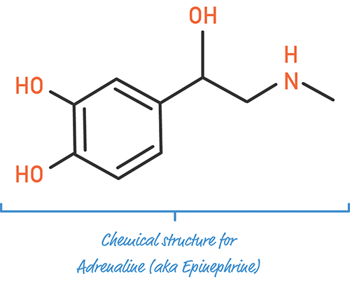 A figure shows the chemical structure for adrenaline (aka Epinephrine).